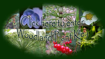 enter woodland plant key